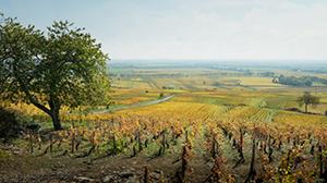 Szenenbild Der Wein und der Wind
