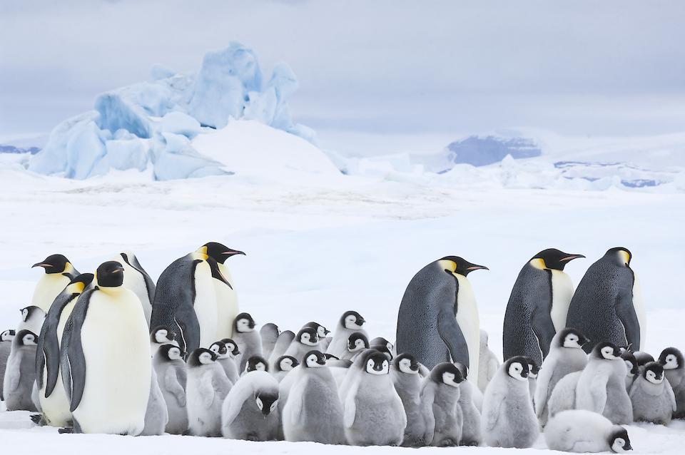 Szenenbild Die Reise der Pinguine 2