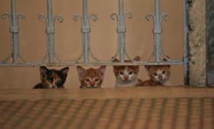 Szenenbild Kedi - Von Katzen und Menschen