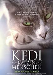 Hauptfoto Kedi - Von Katzen und Menschen